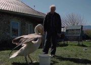 Найденного в порту Новороссийска пеликана Гришу отправили в приют учиться охоте