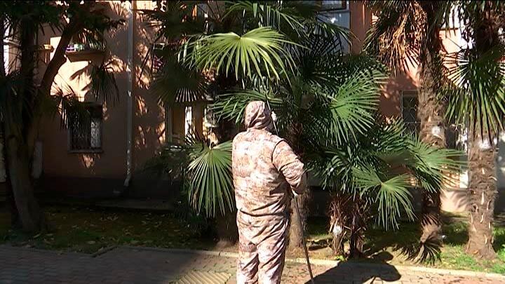 В Сочи стартовал эксперимент по спасению пальм