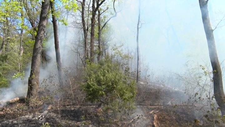 На Кубани авиация сбросила для тушения лесных пожаров более 200 тонн воды