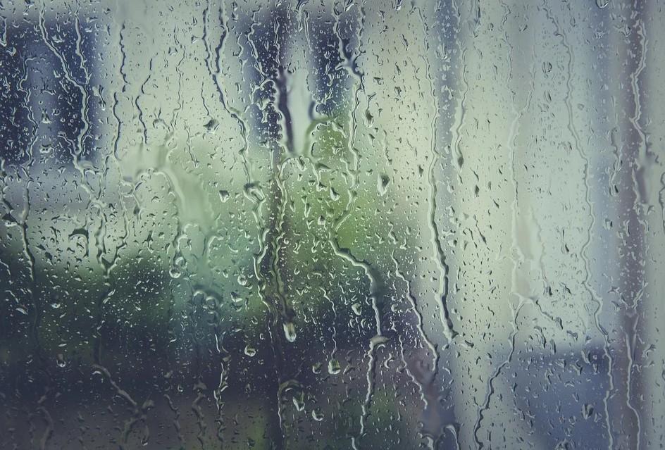 членистоногие, запах дождя, дождь
