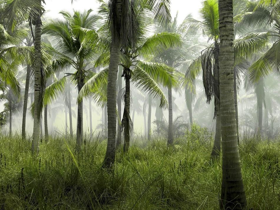 тропики, атнтарктида