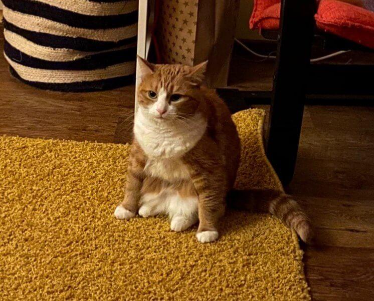 фелинотерапия, кошки, кошка