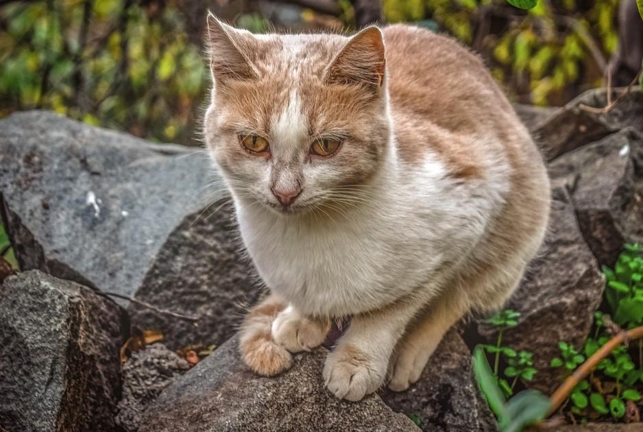 коронавирус, кошки, собаки