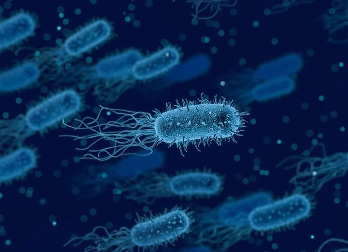 бактерии, антибиотики, мусор