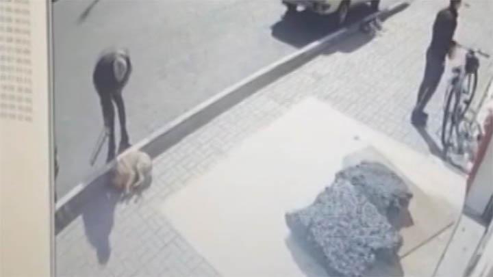 В Сочи зоозащитники призвали полицию наказать серийного убийцу собак