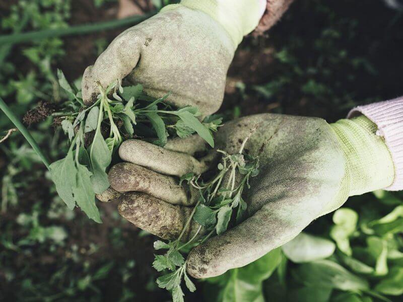 работа в саду, здоровье