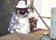 На Кубани начался сезон сбора пыльцы для майского меда