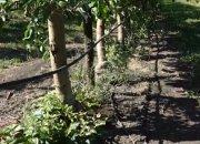 На Кубани 15 районов останутся без урожая фруктов из-за затяжных заморозков