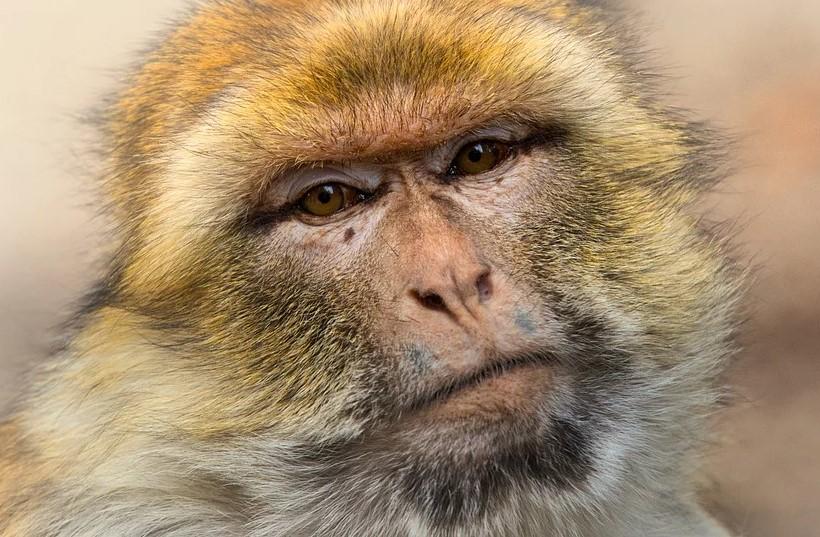 вакцина от кронавируса, ученые, обезьяны