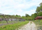В Краснодарском крае приступили к сбору клубники, гороха и зелени