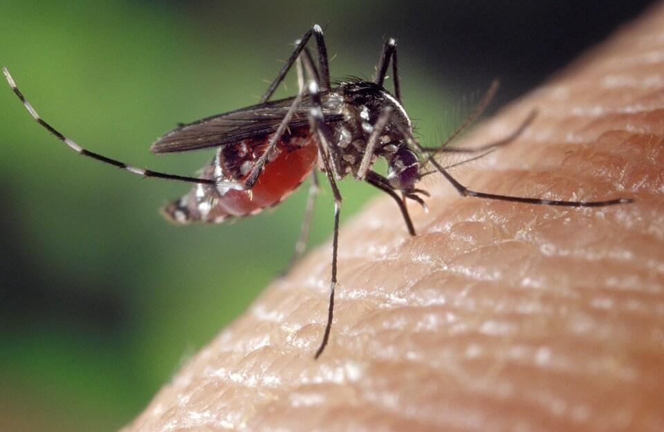 комары, зуд от укусов