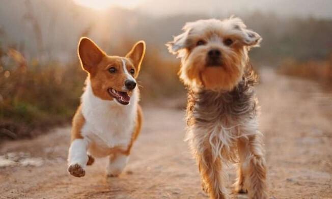 «Встроенный компас»: как собаки ориентируются в незнакомой местности