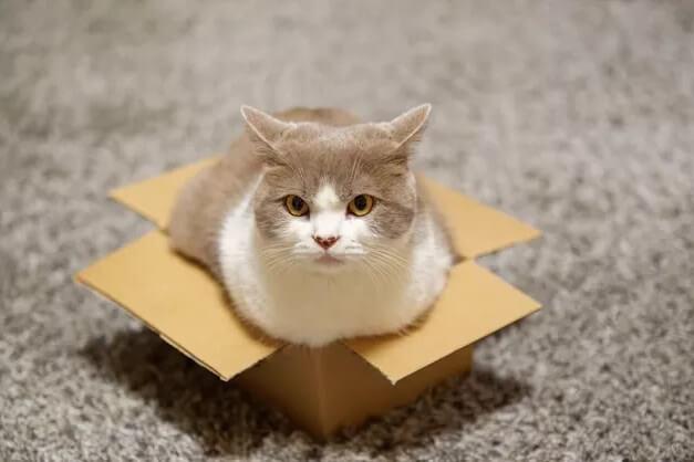 Пять причин почему кошка лезет в коробку