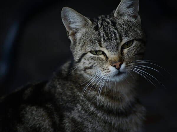 Кошка мешает спать — что делать?