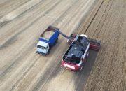 На Кубани идет уборка озимого ячменя, пшеницы, рапса и зернового гороха