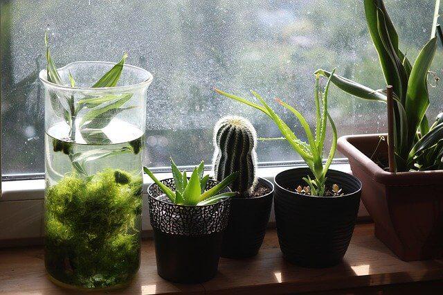 увлажнить воздух, комнатные растения