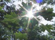 Кубанские специалисты рассказали, как пережить аномальную жару