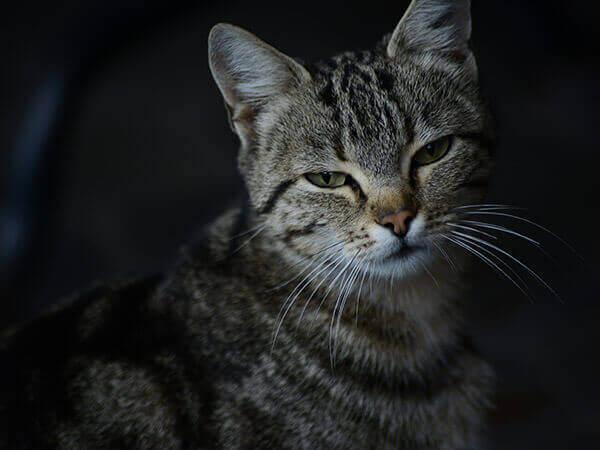 Как кошка с собакой: ученым удалось примирить четвероногих при помощи феромонов