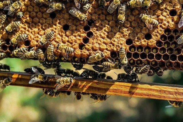 apiary-1867537_640