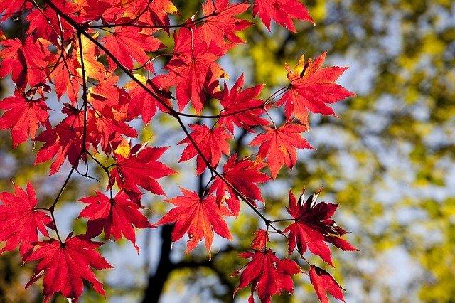 Ученый рассказал, что в этом году осень начнется не 1 сентября
