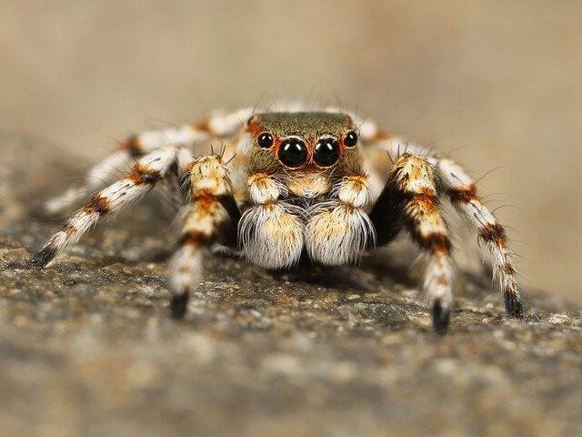 critterpedia, змеи, пауки