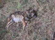 На Кубани неизвестные расстреляли шесть бродячих собак