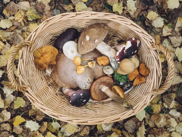 Биолог предупредил о вреде некоторых съедобных грибов