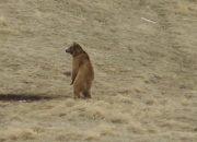 «Факты 24»: на Кубани жители пожаловались на массовые набеги медведей