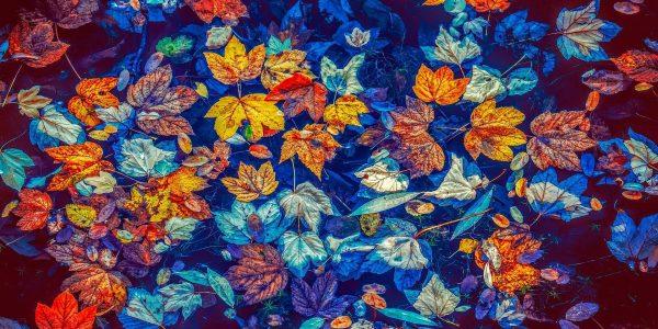 Сиди и смотри: лучшие фильмы про осень