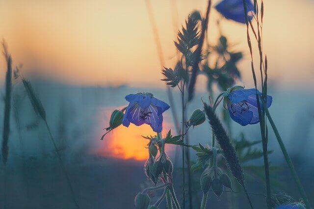 meadow-811339_640