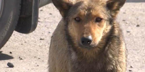 На Кубани планируют построить первый муниципальный приют для собак