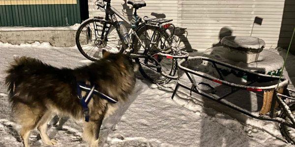 Велосипедист с собакой к Новому году преодолеет 2,8 тыс. км через горы к Сочи