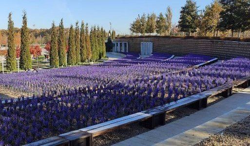 В парке «Краснодар» на зиму посадили «электрический» шалфей