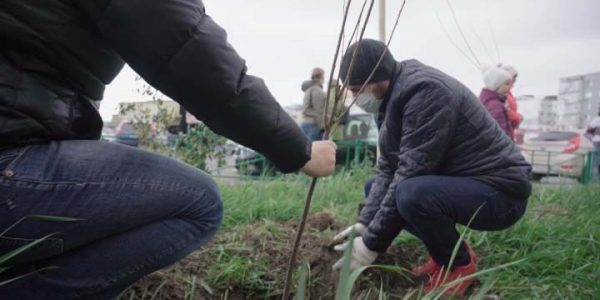 В Новороссийске местные жители высадили около 50 дубов, яблонь и груш