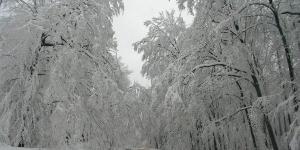 В горах Сочи 25 ноября синоптики обещают гололедицу и налипание мокрого снега
