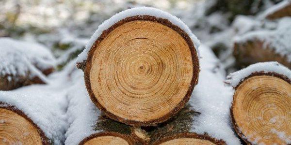 На Кубани доработают закон о заготовке древесины для населения