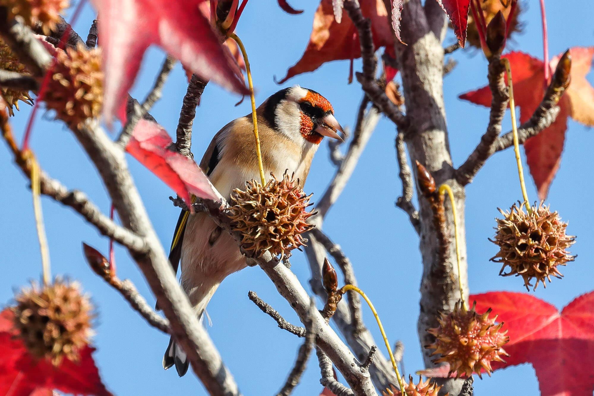 Перелетные и местные птицы в Сочи стали объектами для бердвотчинга