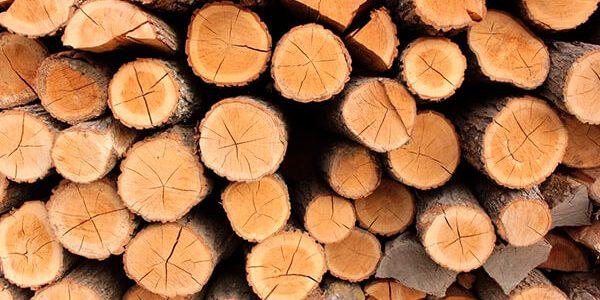 На Кубани «черный лесоруб» уничтожил 150 деревьев на 25 млн рублей