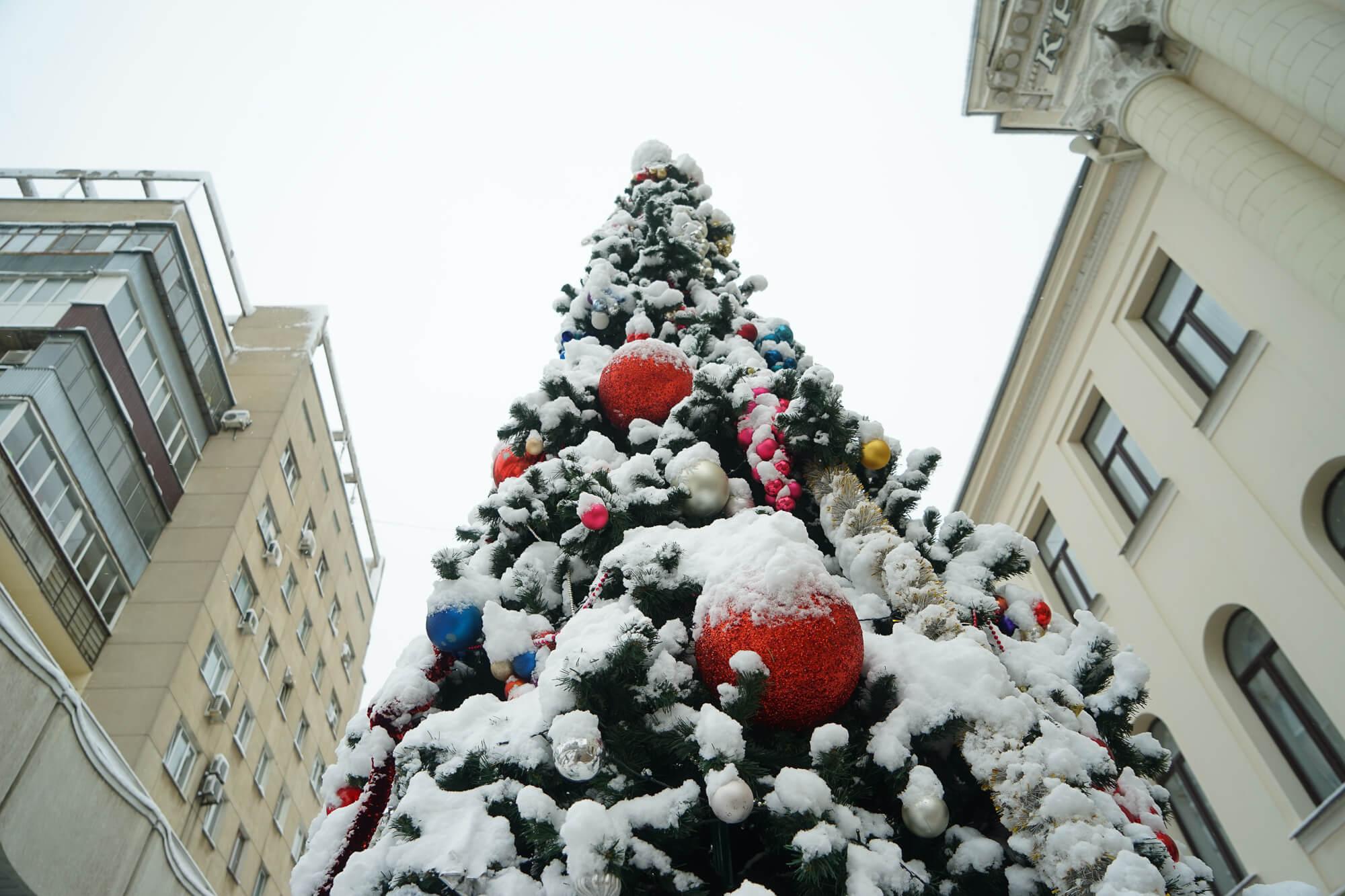 Снегопад в Краснодаре: как горожане встретили предновогодний снег