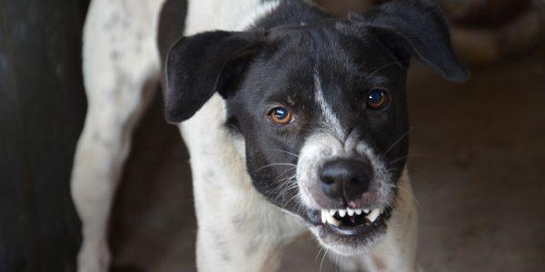 Росстат добавит к экипировке переписчиков средства для отпугивания собак