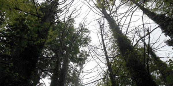 На Кубани создадут 39 особо охраняемых природных территорий