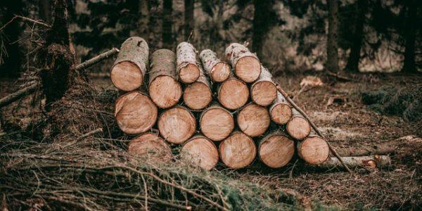 На Кубани «черные лесорубы» уничтожили более 850 деревьев на 42,3 млн рублей