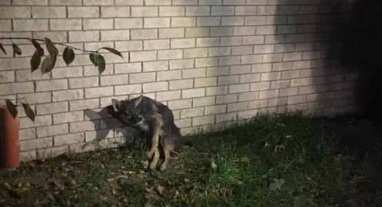 В Новороссийске спасатели вытащили из ливневки травмированную собаку
