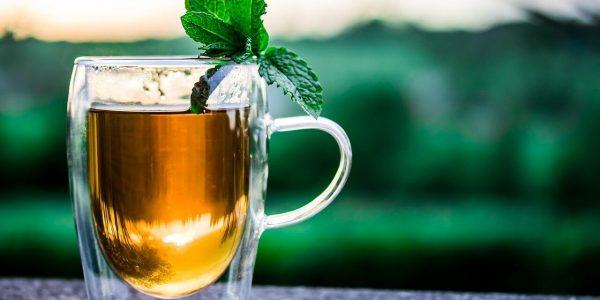 Знай наших: чай Иуды – 115 лет краснодарскому чаю