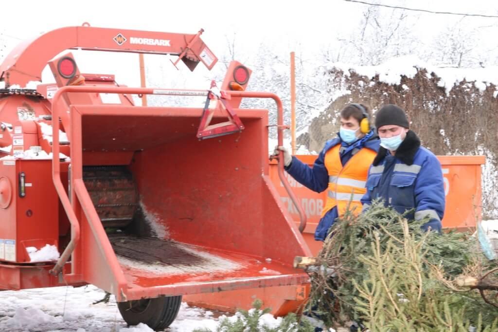 В Краснодаре утилизировали около 100 куб. метров елок