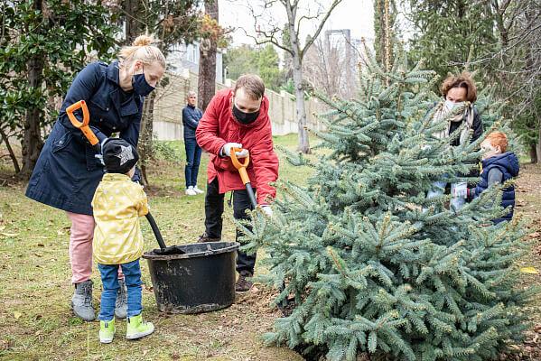 В Сочи заложили аллею новогодних елок в парке «Ривьера»