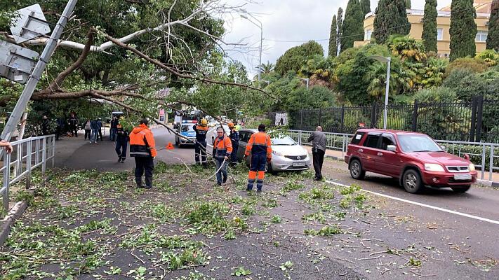 В Сочи городские службы устраняют последствия урагана