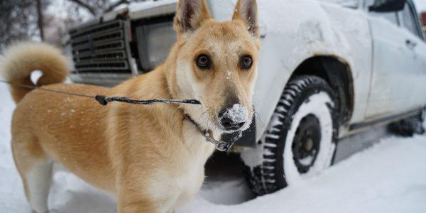 Настоящая зима в Краснодаре: улицы города занесло снегом. Фоторепортаж
