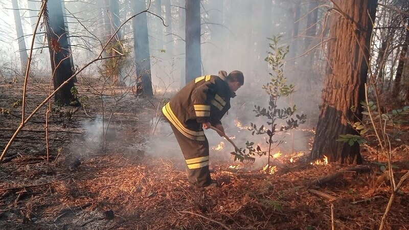 На Кубани спасатели локализовали два природных пожара из шести