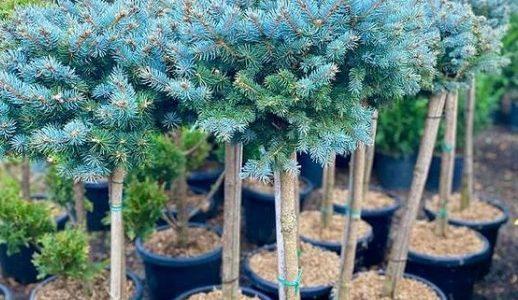 В Краснодаре мужчина обокрал питомник декоративных растений на 280 тыс. рублей